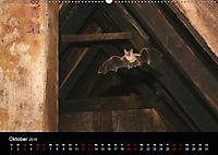 Fledermäuse - Jäger der Nacht (Wandkalender 2019 DIN A2 quer) - Produktdetailbild 10