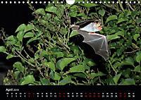 Fledermäuse - Jäger der Nacht (Wandkalender 2019 DIN A4 quer) - Produktdetailbild 4
