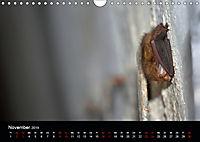 Fledermäuse - Jäger der Nacht (Wandkalender 2019 DIN A4 quer) - Produktdetailbild 11
