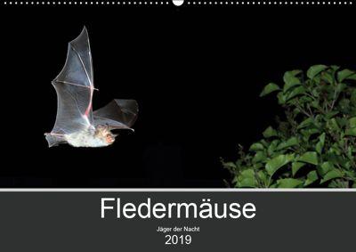 Fledermäuse - Jäger der Nacht (Wandkalender 2019 DIN A2 quer), Otto Schäfer