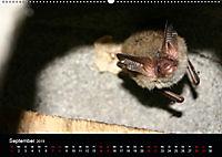 Fledermäuse - Jäger der Nacht (Wandkalender 2019 DIN A2 quer) - Produktdetailbild 9