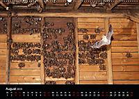 Fledermäuse - Jäger der Nacht (Wandkalender 2019 DIN A2 quer) - Produktdetailbild 8