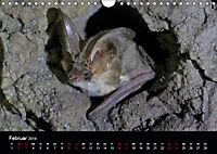 Fledermäuse - Jäger der Nacht (Wandkalender 2019 DIN A4 quer) - Produktdetailbild 2