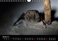 Fledermäuse - Jäger der Nacht (Wandkalender 2019 DIN A4 quer) - Produktdetailbild 1
