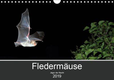 Fledermäuse - Jäger der Nacht (Wandkalender 2019 DIN A4 quer), Otto Schäfer