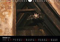 Fledermäuse - Jäger der Nacht (Wandkalender 2019 DIN A4 quer) - Produktdetailbild 10