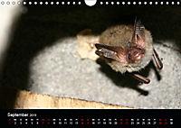 Fledermäuse - Jäger der Nacht (Wandkalender 2019 DIN A4 quer) - Produktdetailbild 9