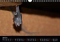Fledermäuse - Jäger der Nacht (Wandkalender 2019 DIN A4 quer) - Produktdetailbild 7