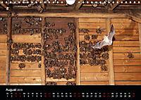 Fledermäuse - Jäger der Nacht (Wandkalender 2019 DIN A4 quer) - Produktdetailbild 8