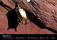 Fledermäuse - Jäger der Nacht (Wandkalender 2019 DIN A4 quer) - Produktdetailbild 12