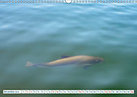 Flensburg Fjord (Wandkalender 2019 DIN A3 quer) - Produktdetailbild 11