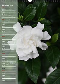 Floral Beauties in the Glasshouse (Wall Calendar 2019 DIN A3 Portrait) - Produktdetailbild 1