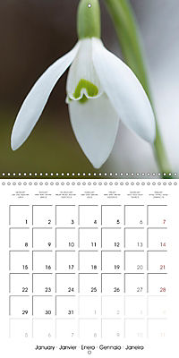 Floral Beauty (Wall Calendar 2018 300 × 300 mm Square) - Produktdetailbild 1