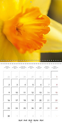 Floral Beauty (Wall Calendar 2018 300 × 300 mm Square) - Produktdetailbild 4