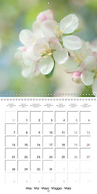 Floral Beauty (Wall Calendar 2018 300 × 300 mm Square) - Produktdetailbild 5