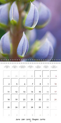 Floral Beauty (Wall Calendar 2018 300 × 300 mm Square) - Produktdetailbild 6
