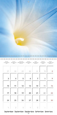 Floral Beauty (Wall Calendar 2018 300 × 300 mm Square) - Produktdetailbild 9