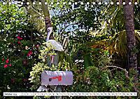 Floridas Post (Tischkalender 2019 DIN A5 quer) - Produktdetailbild 10