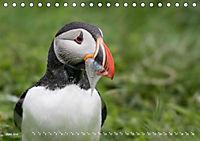 Flügel 2019 Der vogelwilde Kalender (Tischkalender 2019 DIN A5 quer) - Produktdetailbild 6