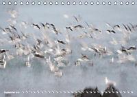 Flügel 2019 Der vogelwilde Kalender (Tischkalender 2019 DIN A5 quer) - Produktdetailbild 9