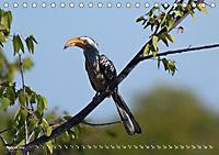 Flügel 2019 Der vogelwilde Kalender (Tischkalender 2019 DIN A5 quer) - Produktdetailbild 8