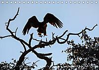 Flügel 2019 Der vogelwilde Kalender (Tischkalender 2019 DIN A5 quer) - Produktdetailbild 3