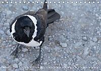 Flügel 2019 Der vogelwilde Kalender (Tischkalender 2019 DIN A5 quer) - Produktdetailbild 5