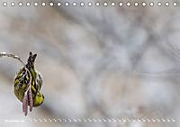 Flügel 2019 Der vogelwilde Kalender (Tischkalender 2019 DIN A5 quer) - Produktdetailbild 11