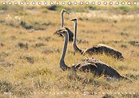 Flügel 2019 Der vogelwilde Kalender (Tischkalender 2019 DIN A5 quer) - Produktdetailbild 4