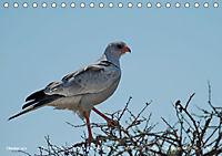 Flügel 2019 Der vogelwilde Kalender (Tischkalender 2019 DIN A5 quer) - Produktdetailbild 10