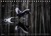 Flügel 2019 Der vogelwilde Kalender (Tischkalender 2019 DIN A5 quer) - Produktdetailbild 7
