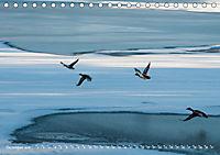 Flügel 2019 Der vogelwilde Kalender (Tischkalender 2019 DIN A5 quer) - Produktdetailbild 12