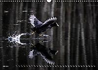 Flügel 2019 Der vogelwilde Kalender (Wandkalender 2019 DIN A3 quer) - Produktdetailbild 7
