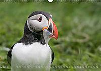 Flügel 2019 Der vogelwilde Kalender (Wandkalender 2019 DIN A3 quer) - Produktdetailbild 6