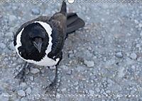 Flügel 2019 Der vogelwilde Kalender (Wandkalender 2019 DIN A3 quer) - Produktdetailbild 5