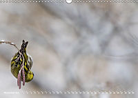 Flügel 2019 Der vogelwilde Kalender (Wandkalender 2019 DIN A3 quer) - Produktdetailbild 11