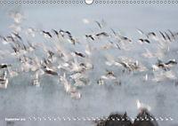 Flügel 2019 Der vogelwilde Kalender (Wandkalender 2019 DIN A3 quer) - Produktdetailbild 9