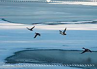 Flügel 2019 Der vogelwilde Kalender (Wandkalender 2019 DIN A3 quer) - Produktdetailbild 12