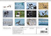 Flügel 2019 Der vogelwilde Kalender (Wandkalender 2019 DIN A3 quer) - Produktdetailbild 13