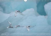 Flügel 2019 Der vogelwilde Kalender (Wandkalender 2019 DIN A4 quer) - Produktdetailbild 2