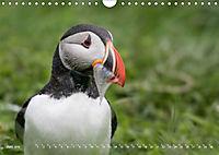 Flügel 2019 Der vogelwilde Kalender (Wandkalender 2019 DIN A4 quer) - Produktdetailbild 6