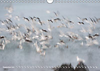 Flügel 2019 Der vogelwilde Kalender (Wandkalender 2019 DIN A4 quer) - Produktdetailbild 9