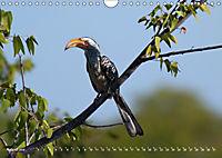 Flügel 2019 Der vogelwilde Kalender (Wandkalender 2019 DIN A4 quer) - Produktdetailbild 8