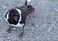 Flügel 2019 Der vogelwilde Kalender (Wandkalender 2019 DIN A4 quer) - Produktdetailbild 5