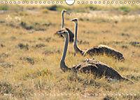 Flügel 2019 Der vogelwilde Kalender (Wandkalender 2019 DIN A4 quer) - Produktdetailbild 4