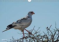 Flügel 2019 Der vogelwilde Kalender (Wandkalender 2019 DIN A4 quer) - Produktdetailbild 10