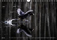 Flügel 2019 Der vogelwilde Kalender (Wandkalender 2019 DIN A4 quer) - Produktdetailbild 7
