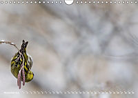 Flügel 2019 Der vogelwilde Kalender (Wandkalender 2019 DIN A4 quer) - Produktdetailbild 11