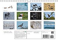 Flügel 2019 Der vogelwilde Kalender (Wandkalender 2019 DIN A4 quer) - Produktdetailbild 13
