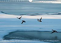 Flügel 2019 Der vogelwilde Kalender (Wandkalender 2019 DIN A4 quer) - Produktdetailbild 12